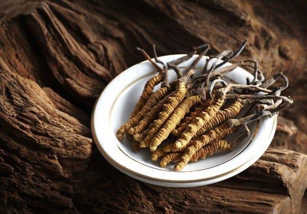 Đông trùng hạ thảo được sử dụng phổ biến trong cả đông và tây y