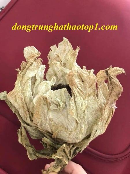 Tuyết liên hoaBhutan là một loại thảo dược vô cùng quý hiếm