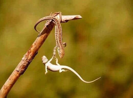 Nếu như cuộc sống có thể làm lại, có thể quay về, lúc đó chúng ta sẽ phát hiện rằng, giúp đỡ người khác chính là giúp đỡ chính mình.