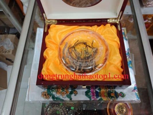 Đông trùng hạ thảo Tây Tạng được coi là vua trong các loại thảo dược
