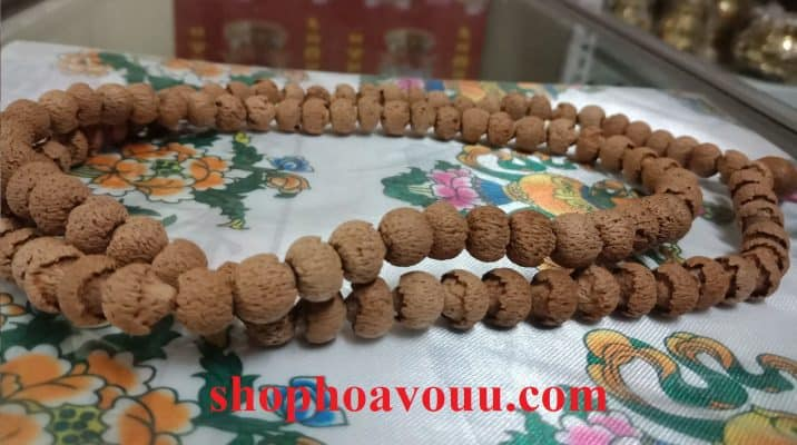 Bồ Đề Liên Hoa (Lotus Bodhi) 10 li tại Shop Hoa Vô Ưu